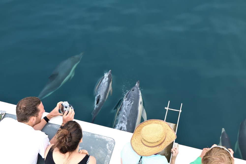 #9 of Top 10 Experiences by Travellers in The Andaman Islands: Dolphin Watching